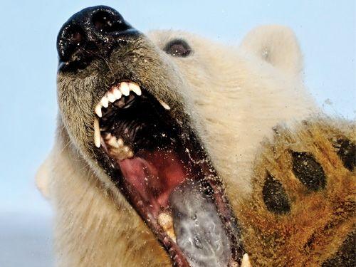 Rusia: El Oso enseña sus garras